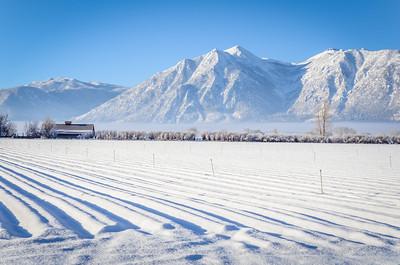 Snowy Nevada Day - Minden, Nevada, USA