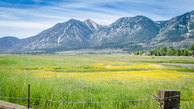 Carson Valley Mellow Yellow