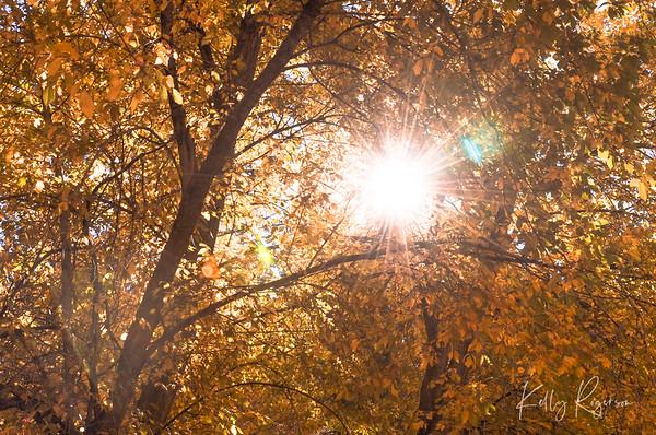 Through The Trees Into The Sun
