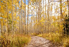 A path that leads to a peaceful nature walk in the Utah mountains.