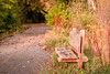 Take a break on this lovely bench while taking a fall walk in Utah.