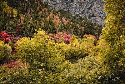 Fall time in the Wasatch Mountains, Northern Utah.