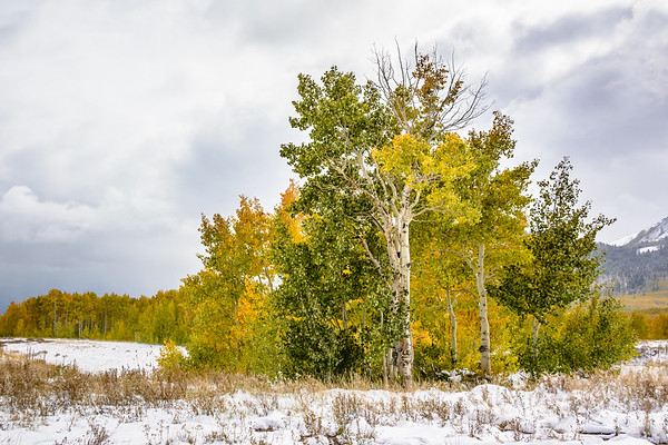 Fall and winter decide to collide together in the mountains of Utah.