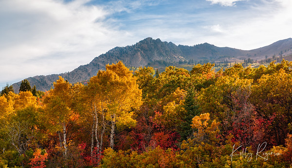 Blanket of Fall Colors - Utah Mountains