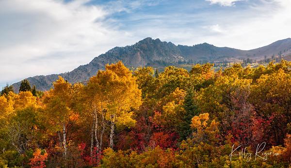 Blanket of Fall Colors - Utah Mountains
