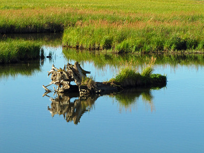 Anchorage Coastal Wildlife Refuge (Potter Marsh), Alaska (4)