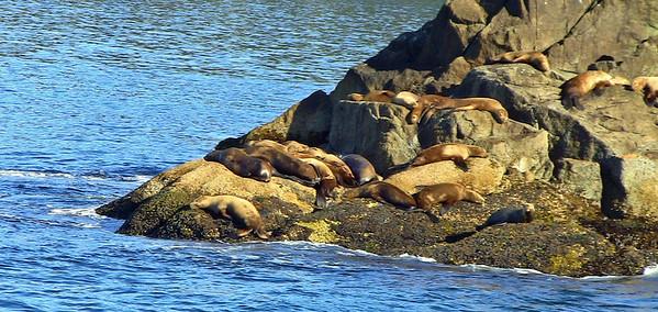Kenai Fjords National Park Six-Hour Cruise, Alaska (6)