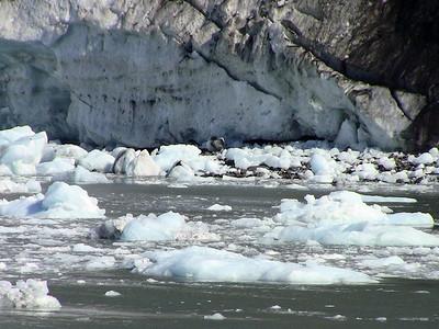 Kenai Fjords National Park Six-Hour Cruise, Alaska (15)