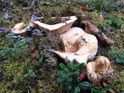 Mushrooms (21)