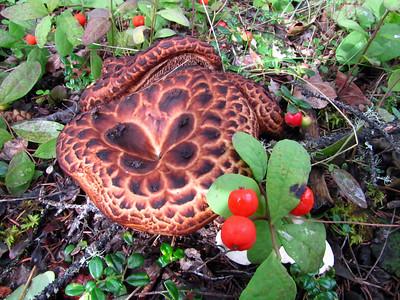 Mushrooms (27)