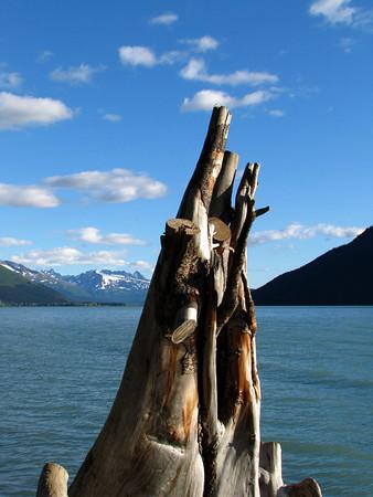 Trail River Campground (Kenai Lake), Alaska (6)
