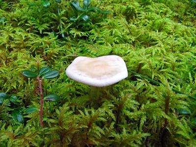 Sourdough Campground in Tok, Alaska (Mushrooms)  (5)
