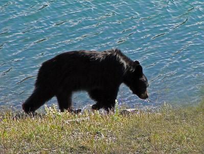Medicine Lake, Jasper National Park (2)