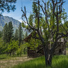 Main Salmon River Homestead