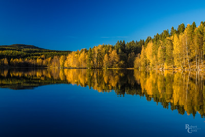 Norwegian Autumn Blue & Gold