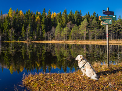 Autumn Reflections and a Norwegian Trail Dog