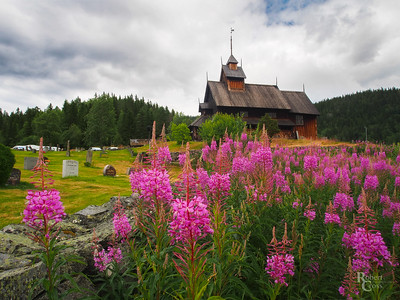 Norwegian Stave Church & Fireweed