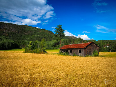 Telemark Rust and Gold