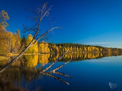 Norwegian Autumn Wood & Water