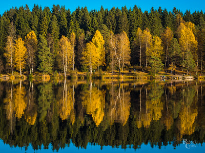 Norwegian Autumn Symmetry