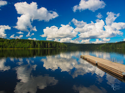 The Forest Mirror of Oslo