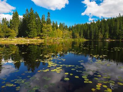 Norwegian Summer Forest Lake