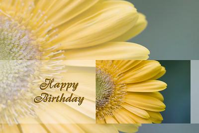 Gerber Daisy Birthday Card
