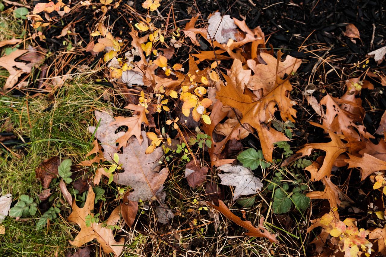 November Textures