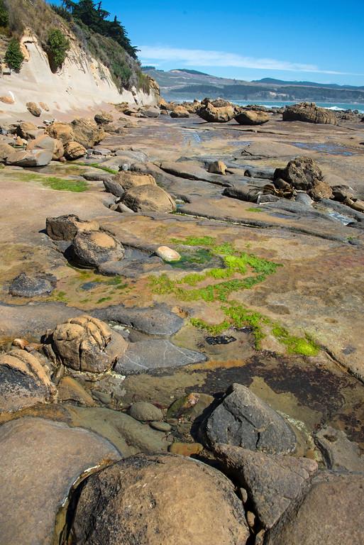 Seal Colony Shag Point Otago New Zealand