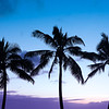 Palm Way of Life
