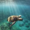 Sun Turtle - Oahu 2017