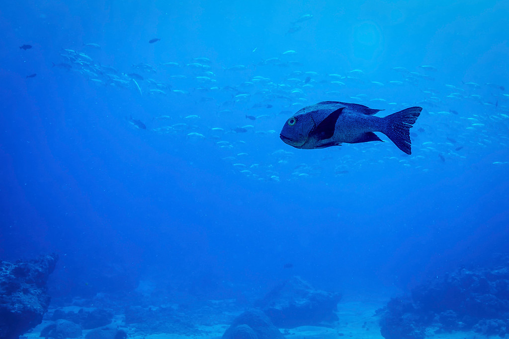 Grumpy Fish