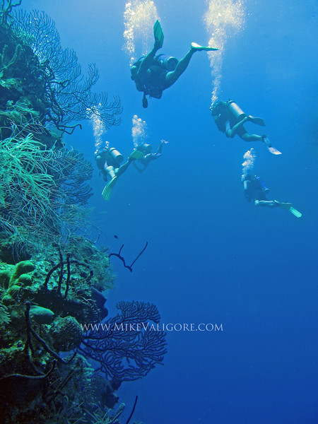Lighthouse Caye wall dive<br /> Belize