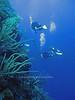 Wall Dive<br /> Belize