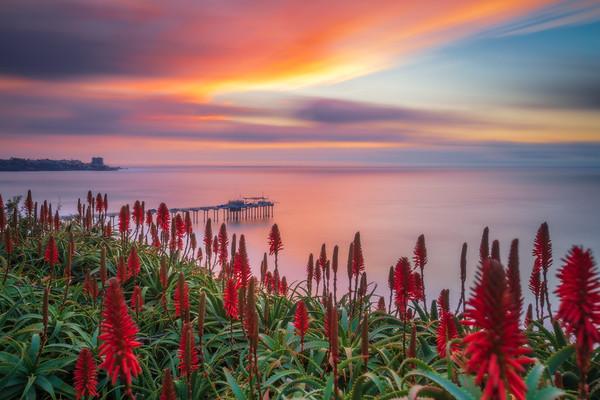 Aloe Sunset