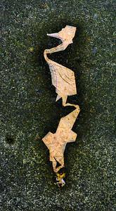 Wet Paper, Sidewalk, Portland, 2016