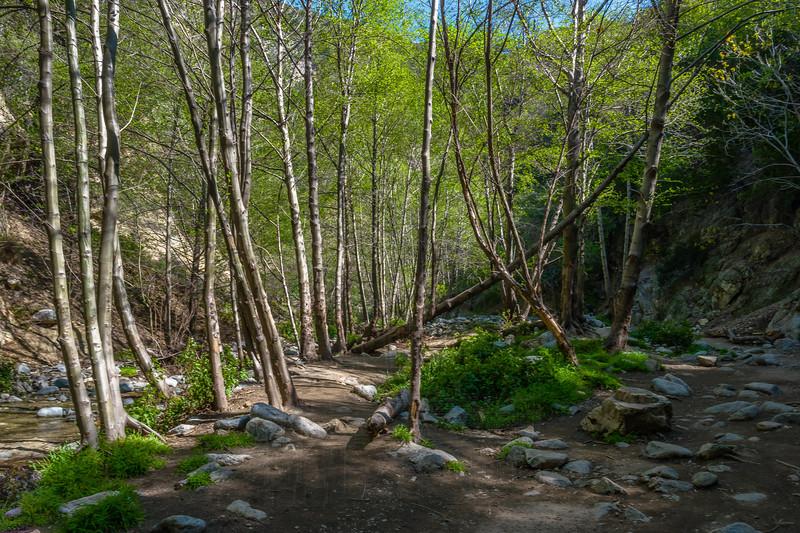 Stream in Eaton Canyon.
