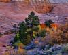 Checkerboard Mesa, Twilight Study