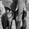 Little elephant - Okavango Delta, Botswana, 2019