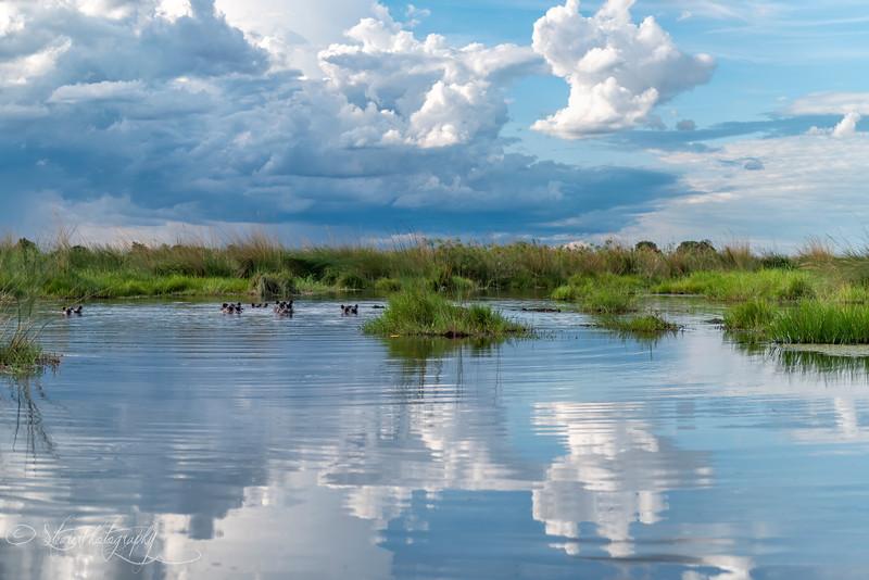 Hippo Scape - Okavango Delta, Botswana, 2019