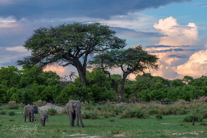 Elephant Scape - Okavango Delta, Botswana, 2019