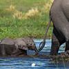 Little elephant II - Okavango Delta, Botswana, 2019