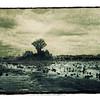 Swamp Prairie