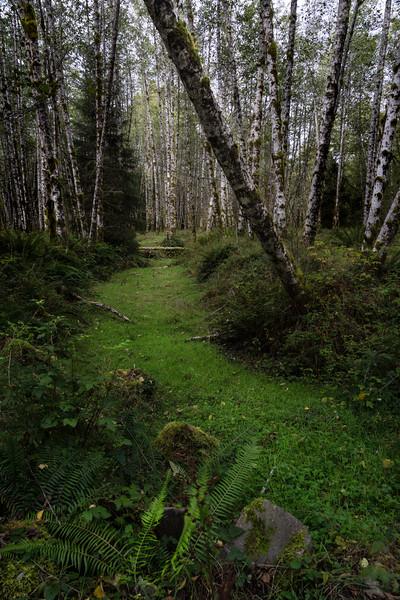 Near Hoh RainForest
