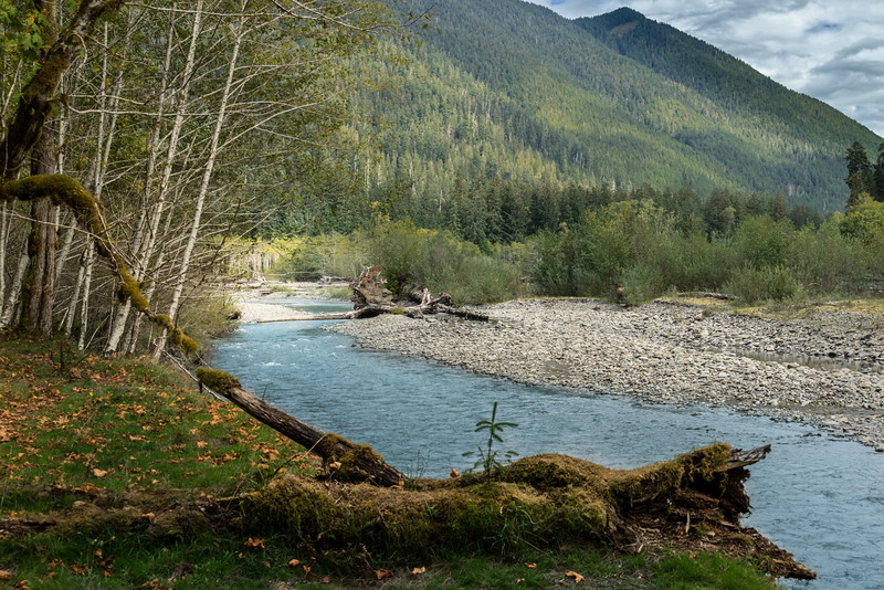 Hoh River, Spruce Trail, Hoh Rain Forest