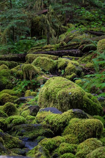 Mossy Rocks Along the Sol Duc Falls Trail