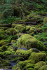 Mossy Rocks Along the Sol Duc Falls Trail