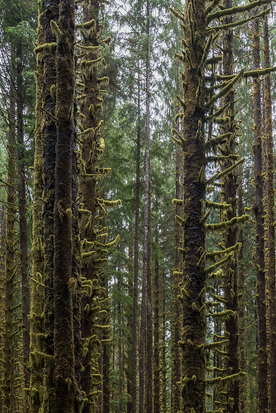 On the Way, Hoh Rain Forest
