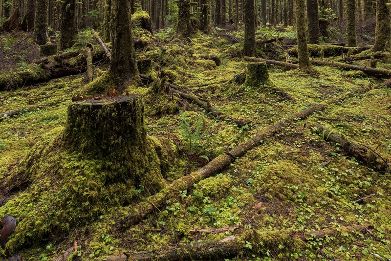 Mosses Over All, Entry Road to Hoh Rain Forest
