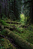 Along the Sol Duc Trail